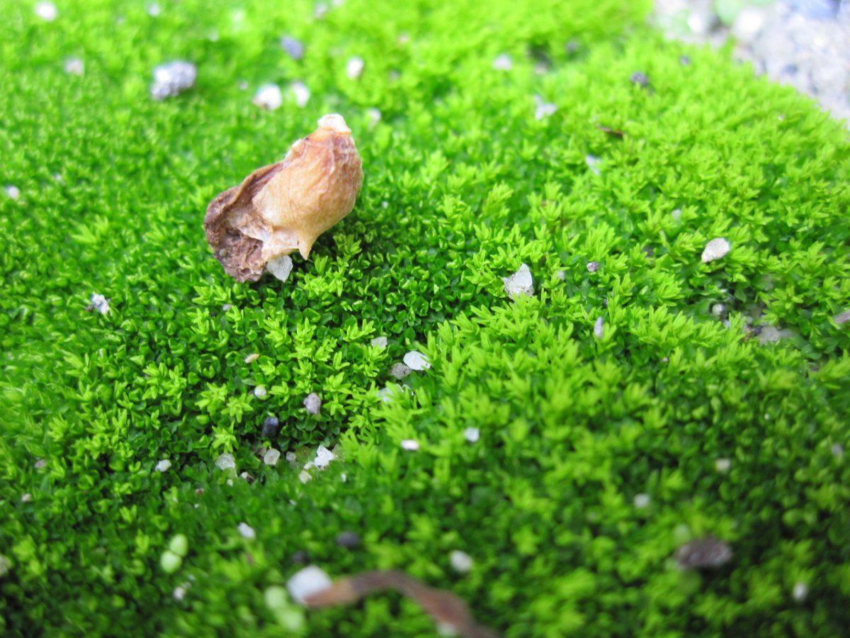 Zielona enklawa pod ręką